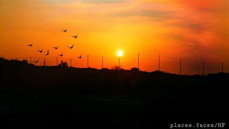 Sunset 🌄 Photographed by @hussein.fwz frEDITS artgaleri , turtles, ... (Khartum, Al Janub, Lebanon)