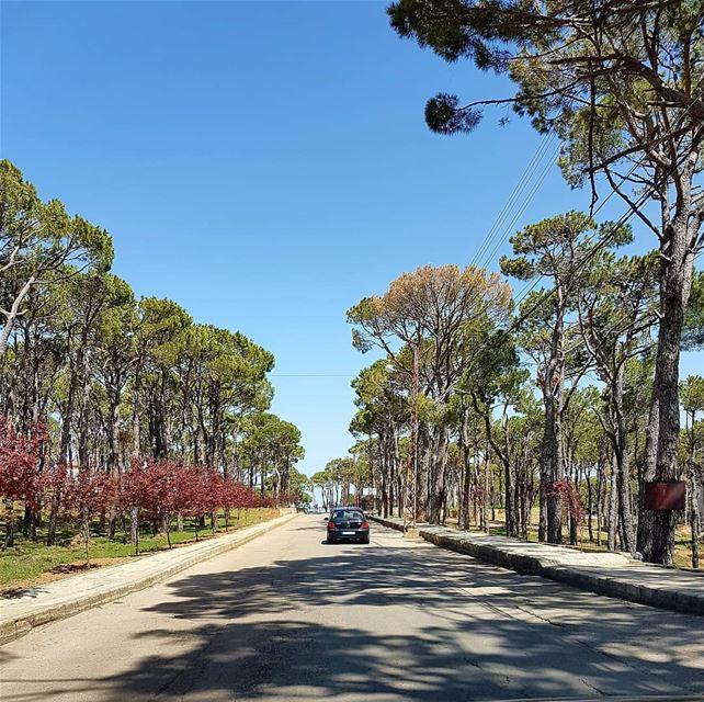 Lebanon.... lebanon beirut khenchara road tree pine nature sky... (El Khenchâra, Mont-Liban, Lebanon)