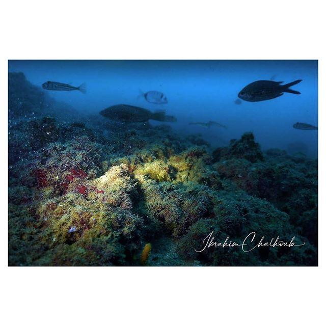En mi mundo favorito 25 metros debajo - ichalhoub in Jounieh Lebanon...