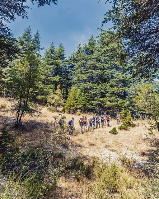 Best hikes are through forests... (Hadath El-Jubbah, Liban-Nord, Lebanon)