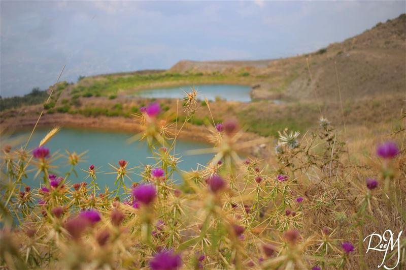 ذلك الغرق في بحر القهوة، في الحب، في التضحية، في الشوك، في المغامرات، في ال (Falougha, Mont-Liban, Lebanon)