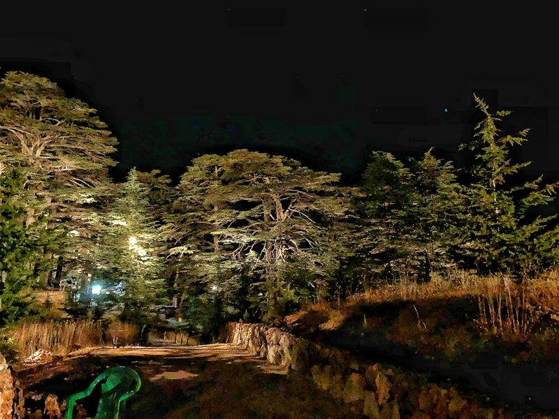 The majestic Cedars Of God Natural Reserve by night.••• Unesco ... (Cedars of God)