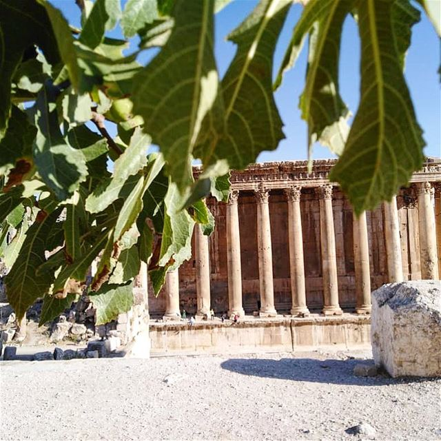 I can see this place with a little green..💚Good Morning people🌞———————— (Baalbek, Lebanon)