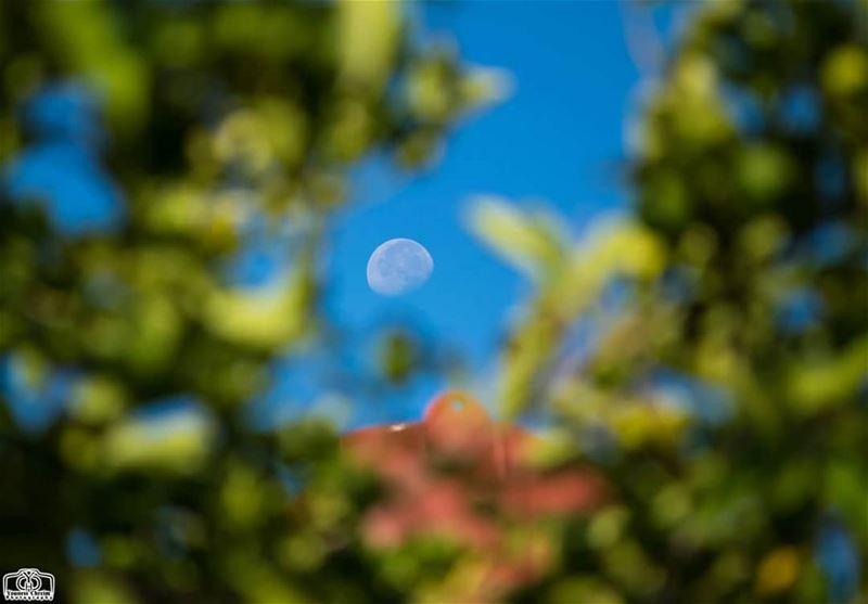 نحنا و القمر جيران ... moon nature lebanon southlebanon nabatieh ...