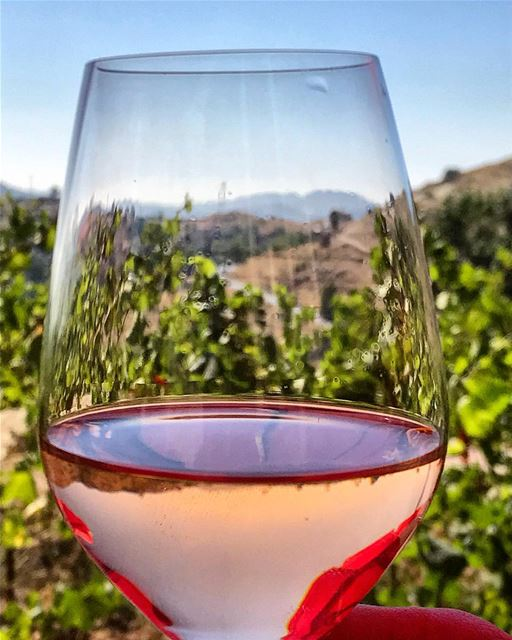 summer wine wineyard sip sky photooftheday instadaily nature ...