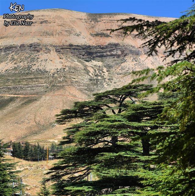 ...يا ملك السيف اللامع من صخب الممالك راجع يا ملك النصر يا سيد الفرسانش (The Cedars of Lebanon)