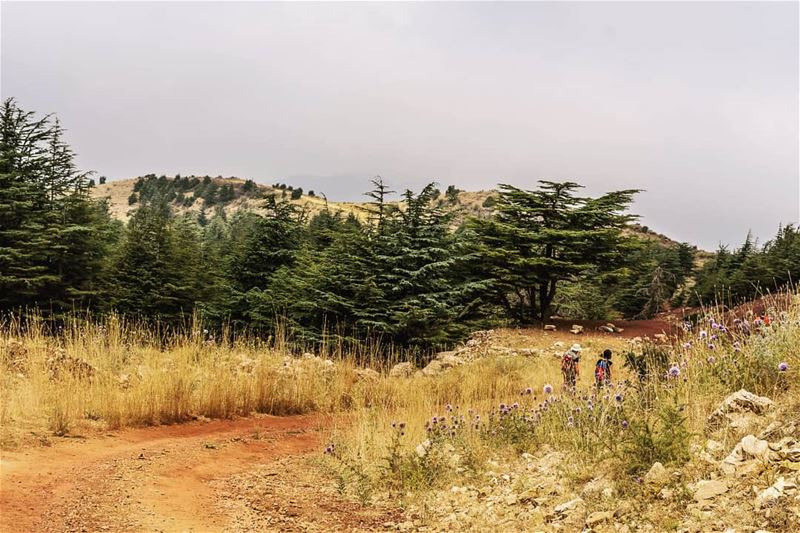 ____________________________________________________ treehugger961 ... (Hadath Al Jubbah, Liban-Nord, Lebanon)