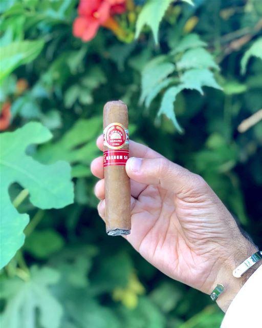 Magnum 54.... cigar cigars cuba havana zahle lebanon garden green... (Zahlé, Lebanon)