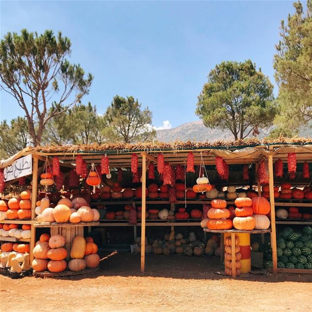 •Pumpkins••• Lebanon Bekaa westbekaa livelovelebanon livelovebekaa ... (West Bekaa)