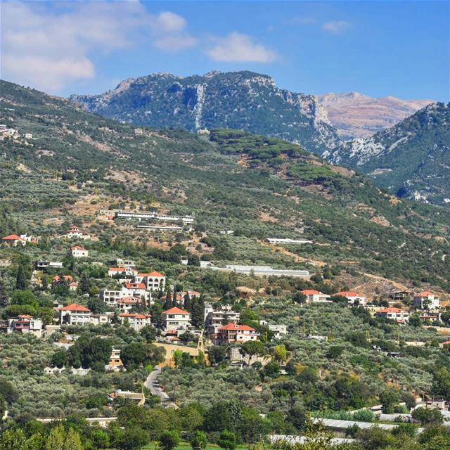 زرعنا تلالك يا بلادي زرعناها ورود.. north_lebanon livelovelebanon ... (Batroun District)
