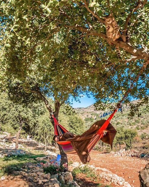 Can you spot the CAT 🐱 ??? ... SkyRockCamping with sanelebanon ...�
