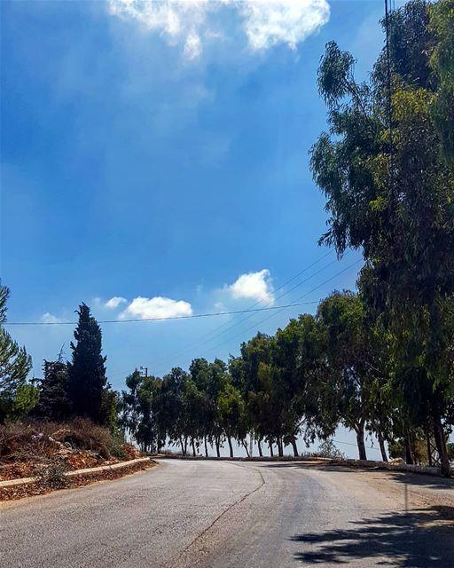 قولوا انو الغصن الطري عم يكبر 🎼🎵🎶🎤 yaroun yarounday hike tree ...