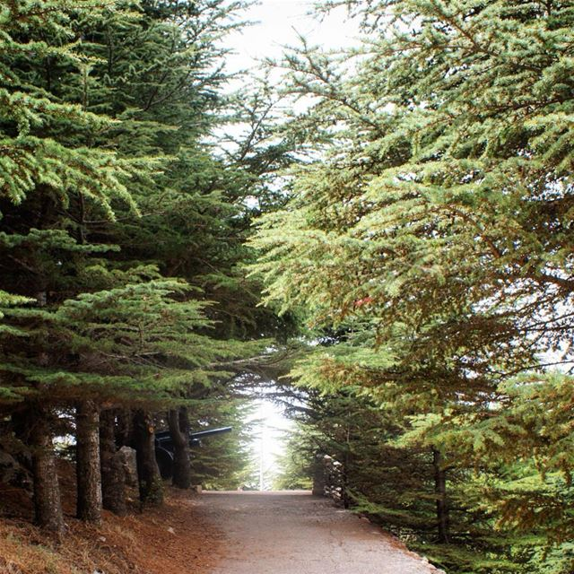 a walk through the woods 🌲 (Falougha, Mont-Liban, Lebanon)