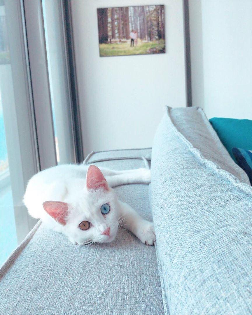 Meet SiSi 😍 lebanon batroun cat homesweethome catsoflebanon sisi ... (Batroûn)