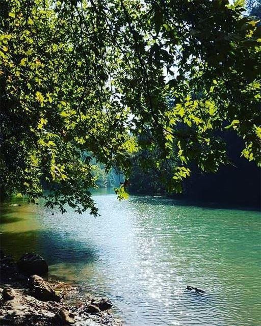No Sunday plans yet?Head to JabalMoussa. chouwan|| unescomab unesco... (Jabal Moussa Biosphere Reserve)