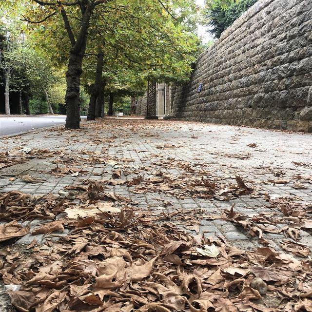 Где то в горах уже листы подают.... autumn summer_2018 beautiful tree... (Sawfar, Mont-Liban, Lebanon)