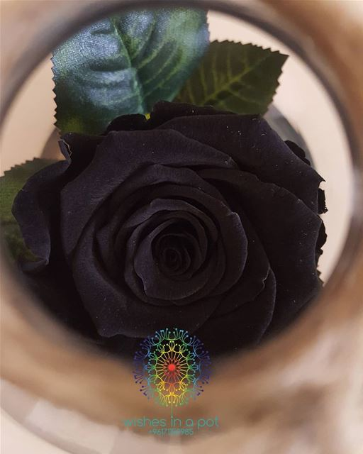Black for Diamond only! ☎️ now: 71159985 lebanon diamonds blackrose ...