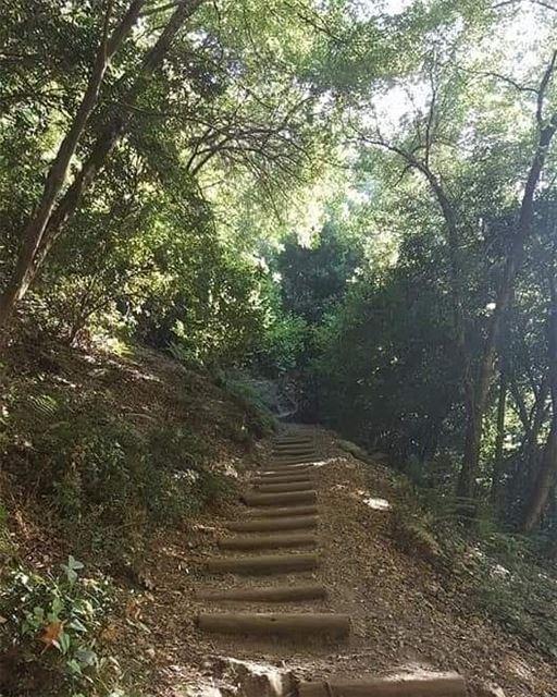 All the way up! JabalMoussa Chouwan nature nationalgeographic ... (Jabal Moussa Biosphere Reserve)