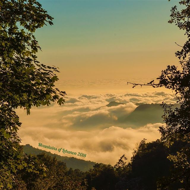 Golden hour framed by oak trees well above the sea of clouds below...... (Ehmej, Mont-Liban, Lebanon)