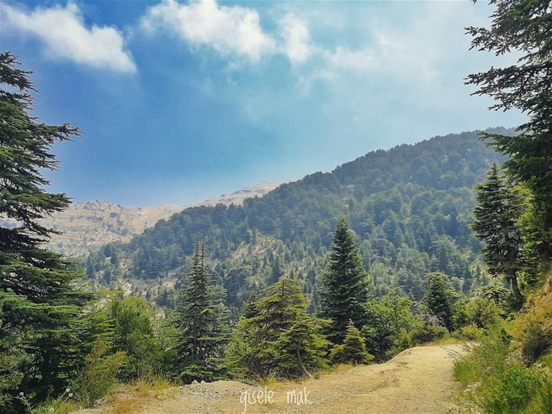 Into the forest we go, to loose our mind and find our soul. hike ... (Lebanon)