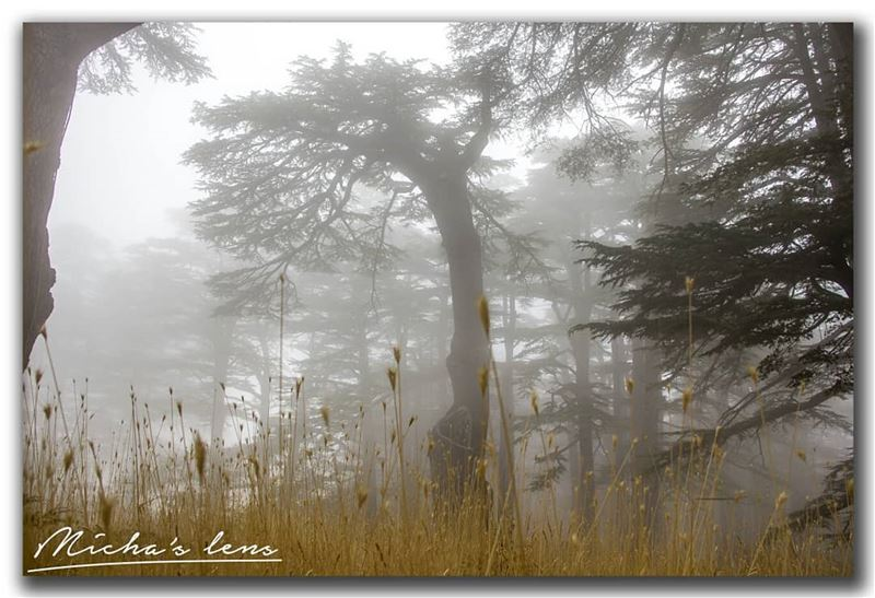 Show up ur majesty ..  thebestinlebanon  superlebanon  lebanonspotlights ...