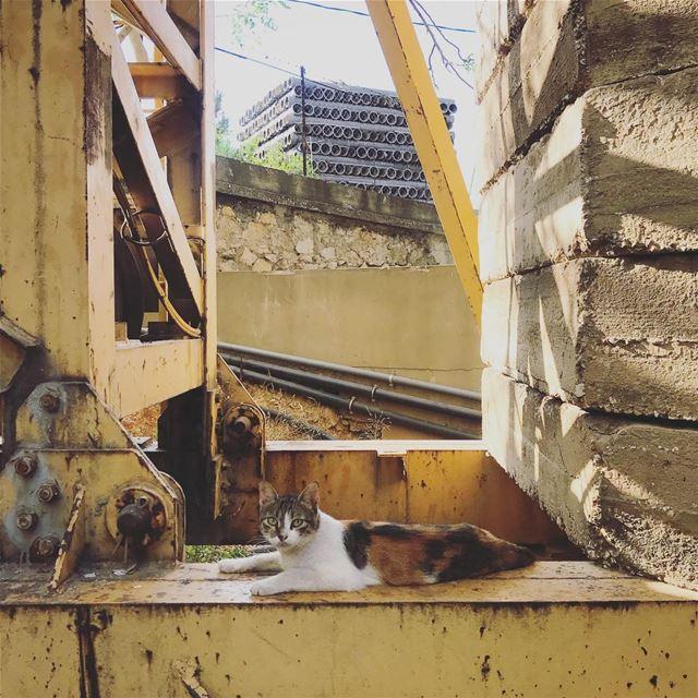 Construction... (Beirut, Lebanon)