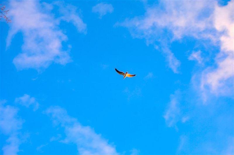 Unleash your potential..... batroun lebanon bird birds ... (Al Batrun, Liban-Nord, Lebanon)