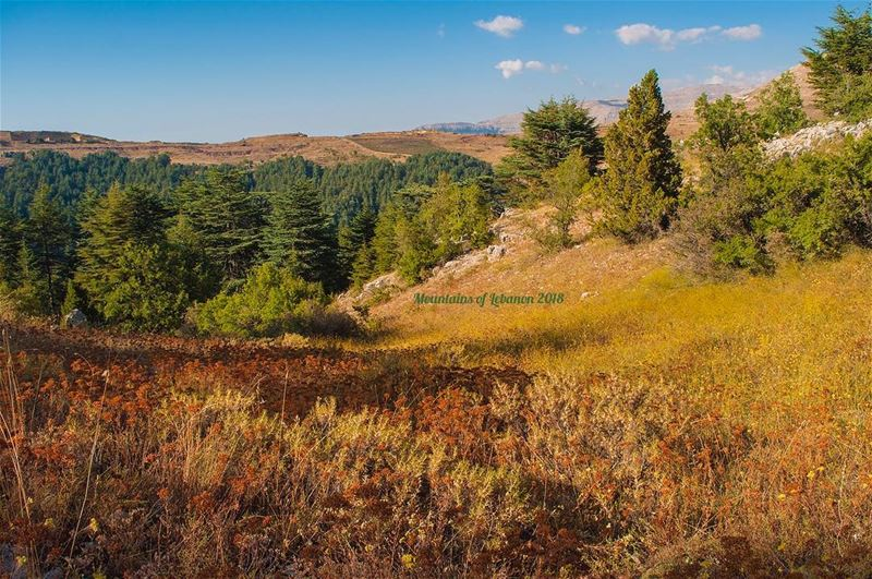 Colors of Summer! gold, brown and various shades of greens, at Tannourine!... (Arz Tannoûrîne)