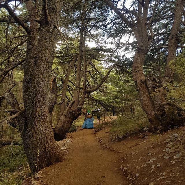 Promenons-nous dans les boisPendant que le loup n'y est pasSi le loup y... (Al Shouf Cedar Nature Reserve)