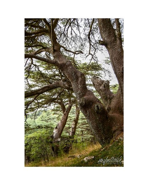 The stronger the roots, the tougher the tree.. wednesday igers ...