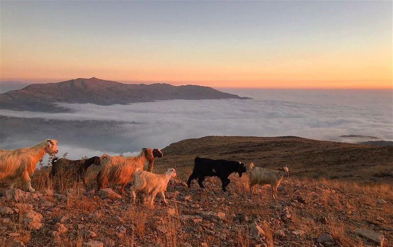 Beautiful sunset colors‼️................. lebanon ... (Mountain goats extreme)