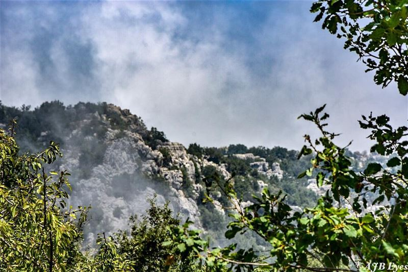 Don't be afraid to go in to the mist, be excited because you don't know... (Jabal Moussa Biosphere Reserve)