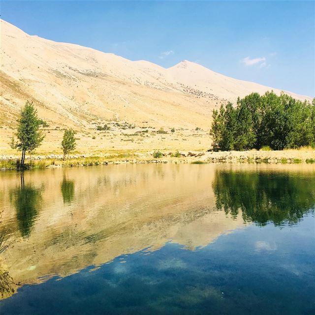 How About A Road-trip?. cedar arz cedaroflebanon mountain lebanon ... (Arz)