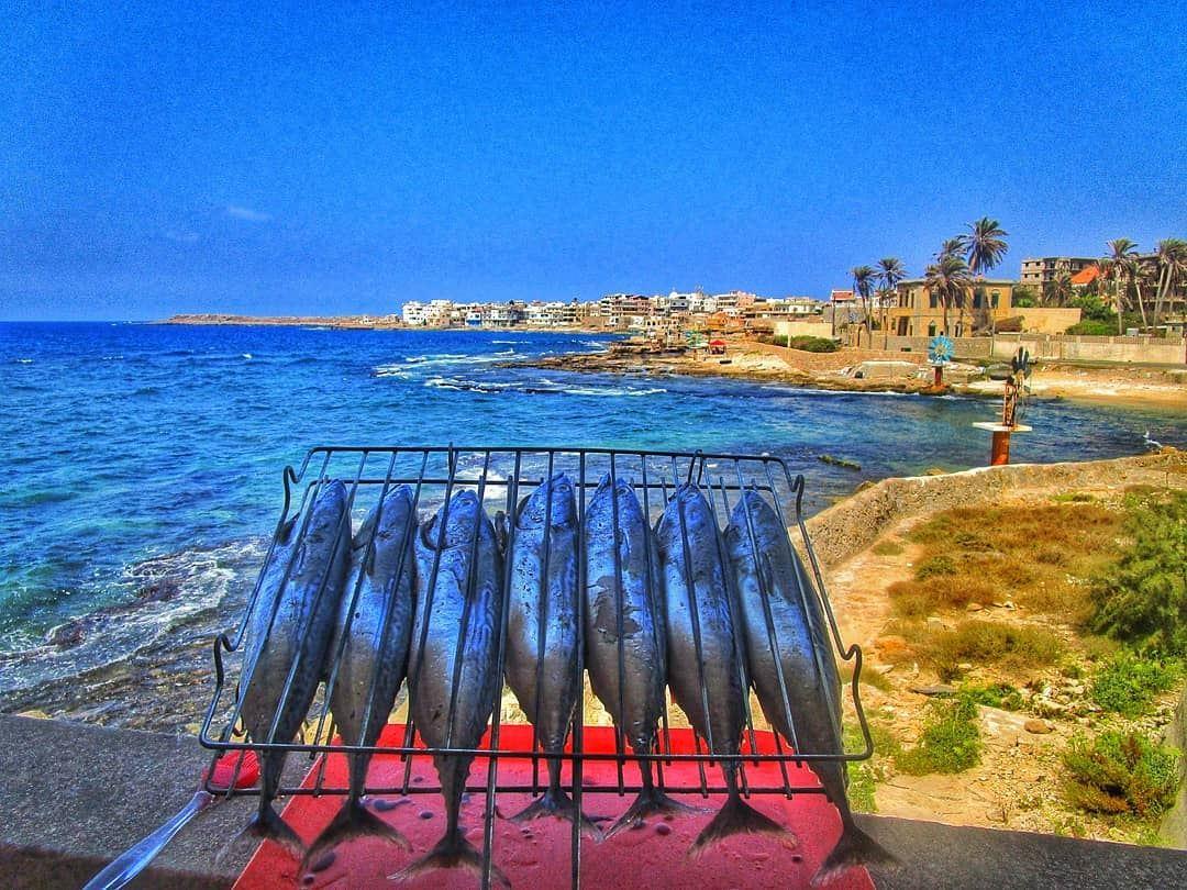 Sunday vibes 🐟🐟🐟 picoftheday lunch sunday sundayfunday sundayvibes... (Anfah, Liban-Nord, Lebanon)