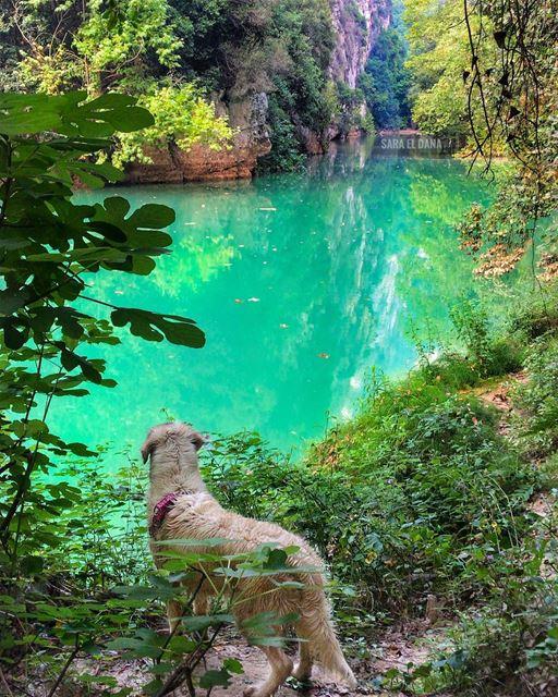 Discovering hidden gems 🐕💦 (Yahshush, Mont-Liban, Lebanon)