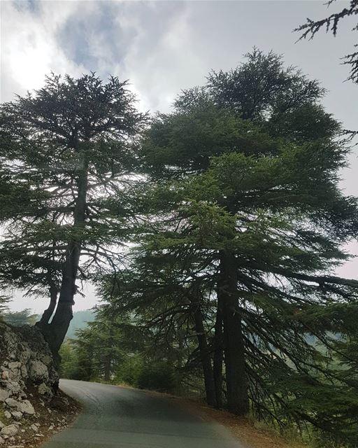 على مفترق الطريق...التقيت بصديق ig_respect ig_lebanon instaamici ... (Al Shouf Cedar Nature Reserve)