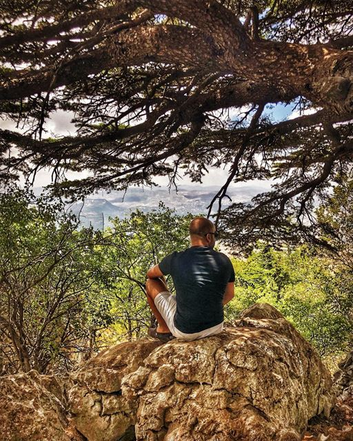 "Did you know that if you go under ""la Martine"" cedar tree in shouf the... (Al Shouf Cedar Nature Reserve)"