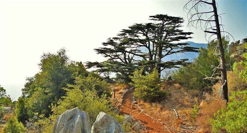 Hello from Tannourine Cedars Reserve...... tannourinecedars ... (Cedar Reserve Tannourine)