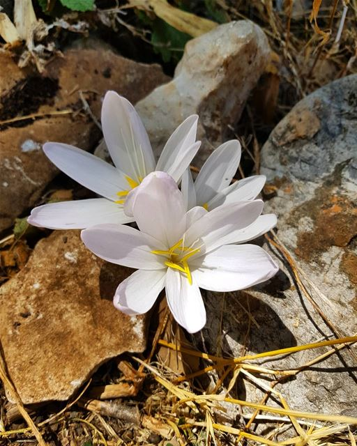 🌼 sergesarkisphotography photographer photo photography flower hike... (Jebel Musa)