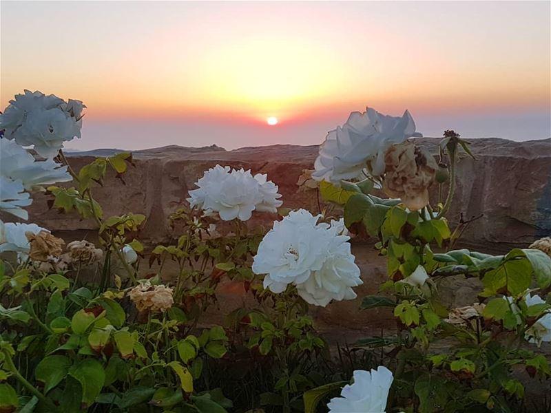 يقولوننتمنى لك أحلاماً سعيدةًألا يوجد أحد يقولنتمنى لك واقعاً سعيداً... (Bhamdoûn, Mont-Liban, Lebanon)