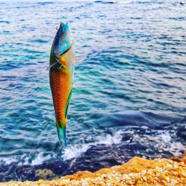 First catch of the day 🐟🎣Good Morning followers ⚘ morning  tuesday ... (Enfé, Liban-Nord, Lebanon)