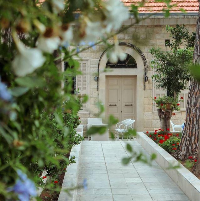 🌷.. lebanon beino akkar liveloveakkar flowering flowers ... (Beïno, Liban-Nord, Lebanon)