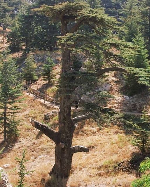 The roots of all goodness lie in the soil of appreciation for goodness ~... (Al Shouf Cedar Nature Reserve)