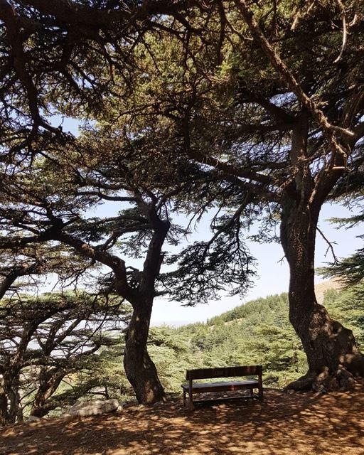 shadows beneath 🌳.. livelovelebanon nature mountains beauty... (Maaser El Shouf Cedar Reserve محمية ارز معاصر الشوف)