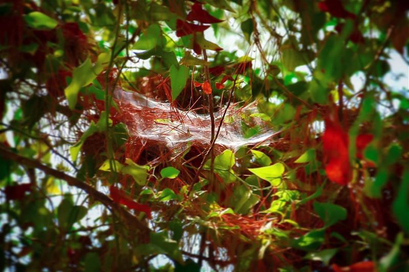 Memory is like a spiderweb that catches new information.. The more it... (Ed Douâr, Mont-Liban, Lebanon)