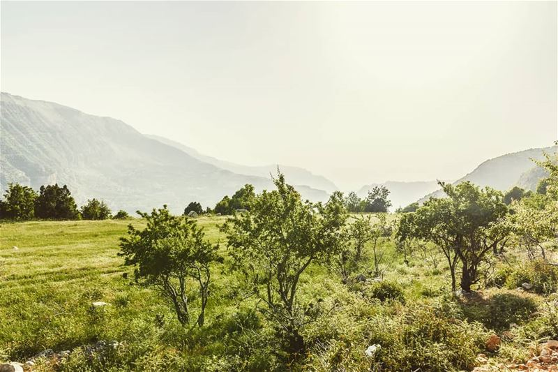 ____________________________________________________ treehugger961 ... (Akoura, Mont-Liban, Lebanon)