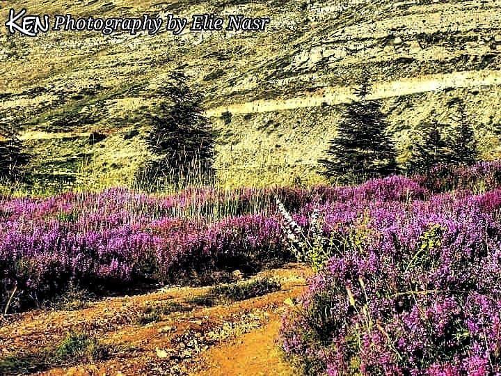 ...أَدنو منك كمُقْبِل على مغامرة، كمدبر عن خوفه أمدّ يديَّ إلى حوض الخزا (El Arz, Liban-Nord, Lebanon)