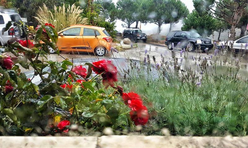 First rain this season lebanoninapicture ptk_lebanon livelovebeirut ... (El Mroûj, Mont-Liban, Lebanon)