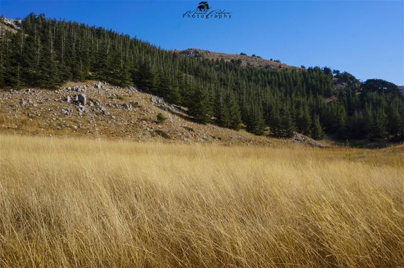 🌲 Barouk reserve 🌲 • • • chouf shoufreserve lebanon beirut ...