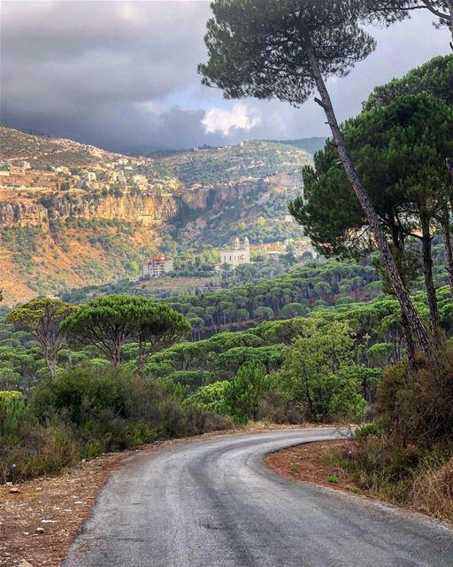في_بلادي غابة الصنوبر في بكاسين الاكبر في الشرق الاوسط .. من هنا سلام ... (Bkâssîne, Al Janub, Lebanon)